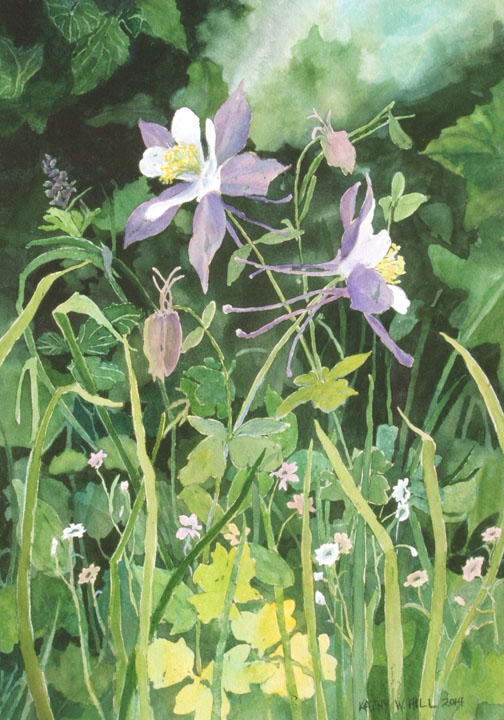 Natural Colorado Columbines - Print