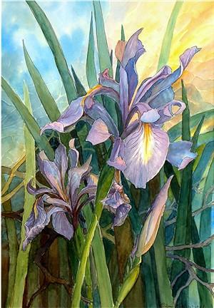 Glorious Wild Iris