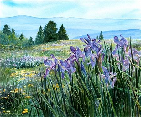 June on Cuchara Pass