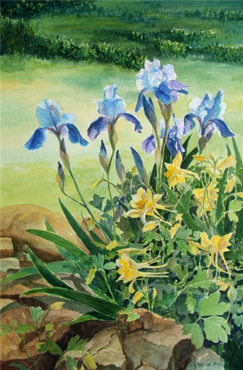 Blue Iris and Yellow Columbines