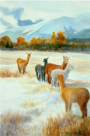 Spanish Peaks Alpacas - print